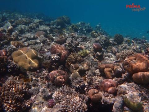 koralove utesy egypt
