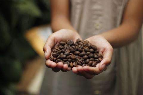 cibetkova kava