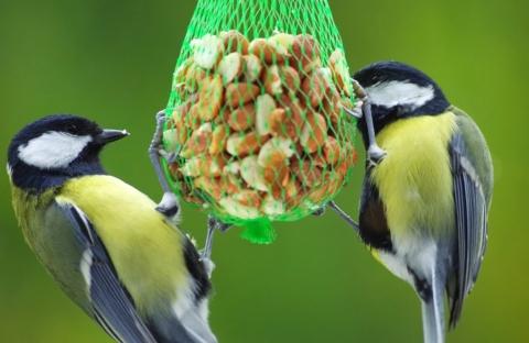 nebezpecne sitky pro ptaky