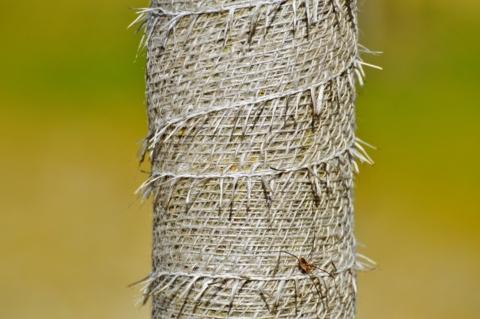 ochrana stromku