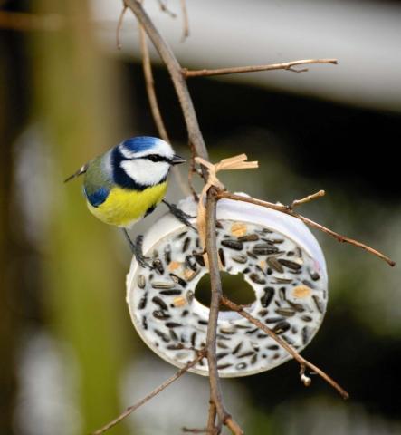 ozdoby pro ptacky