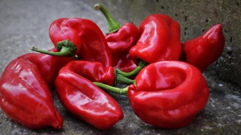 nejlepsi semena sladkych paprik