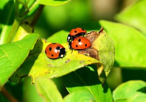 uzitecny hmyz