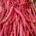 fazol cerveny