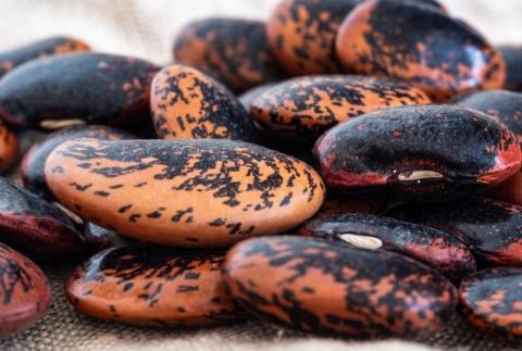 Fazole přidají potřebný dusík do vaší půdy.