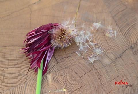 semena gerber