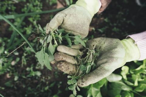 Nevyhazujte plevel a rostliny z vaší zahrady.