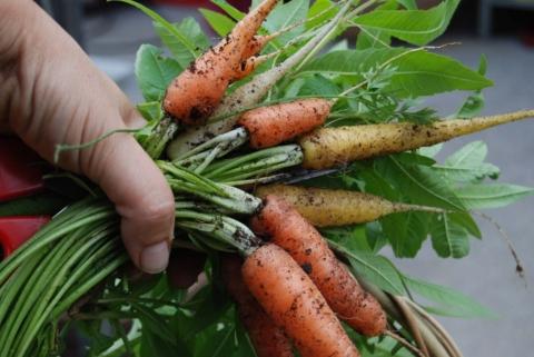 mrazuvzdorna zelenina