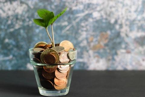 penize finance rostlina