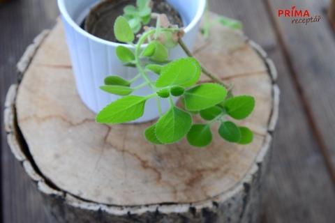 rymovnik rostlina