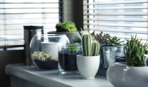 Rostliny, které pročistí ovzduší v domě.