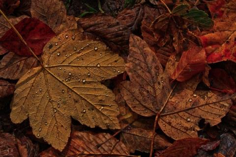 Využijte podzimních listů.