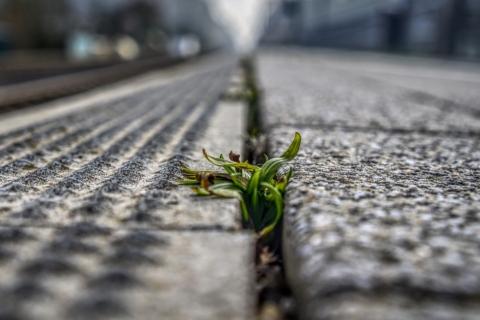 Zatočte s plevelem jednou navždy díky speciální směsi láku a vody.
