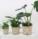 zalivka pokojovych rostlin