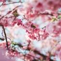 jaro kvetouci strom