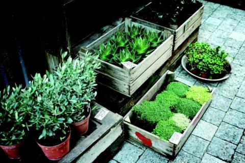 prodej pokojovych rostlin