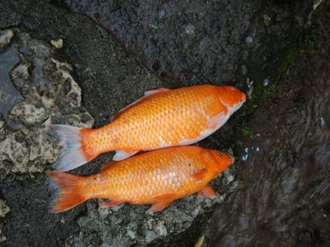 mrtvá ryba