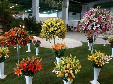 vystava kvety lysa nad labem