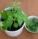 Jak využít rostlinu Rýmovník?