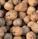 Jak správně sušit vlašské ořechy?